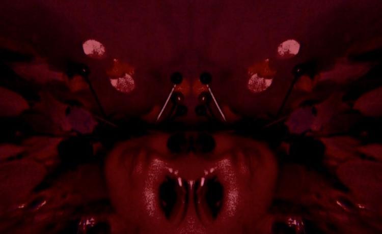 SCHULTZ partage un court extrait de son prochain album