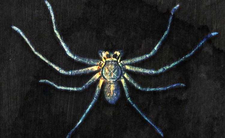 CLAN OF XYMOX aurait une araignée au plafond ?